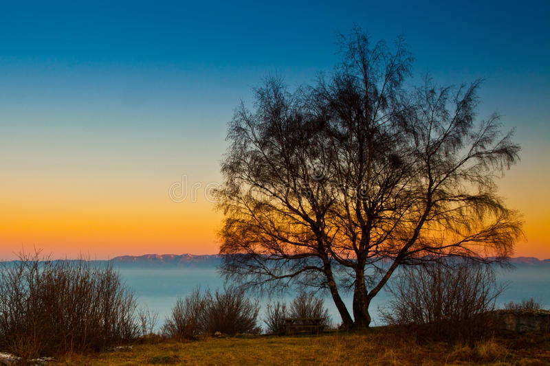 Download Tree At Dawn stock photo. Image of space, calm, silhouette - 21693710
