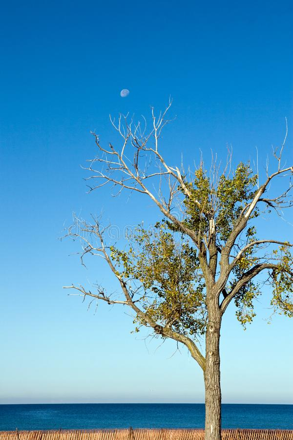 Tree and Daytime Moon