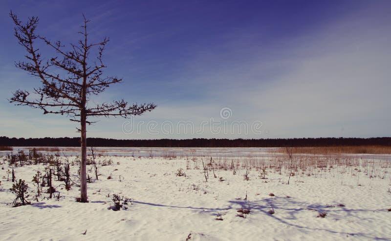 Tree on Desert stock photography