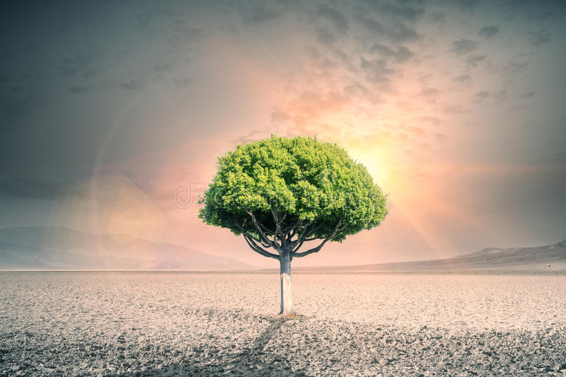 Tree in desert. Creative green tree in the middle of desert. Success concept royalty free illustration