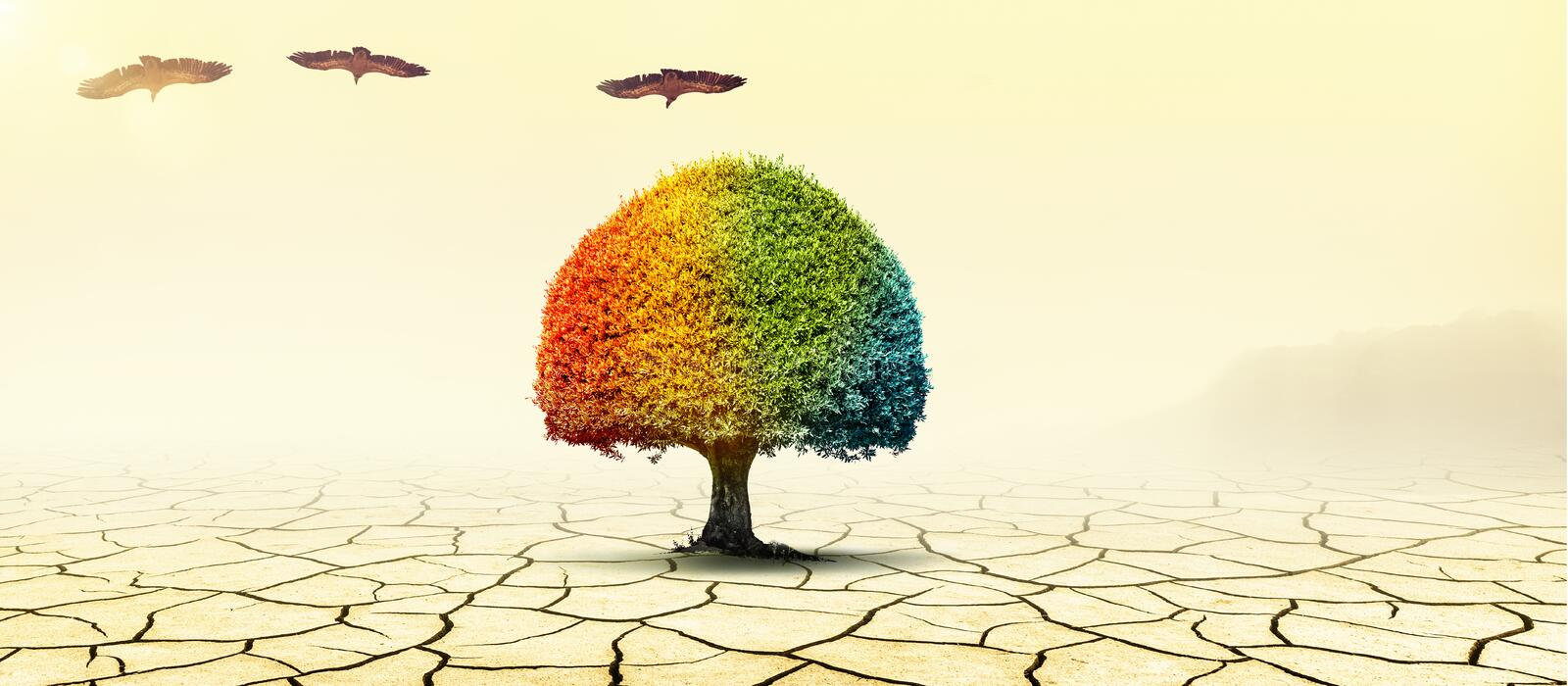 Tree in a desert and a green meadow in climate change stock image