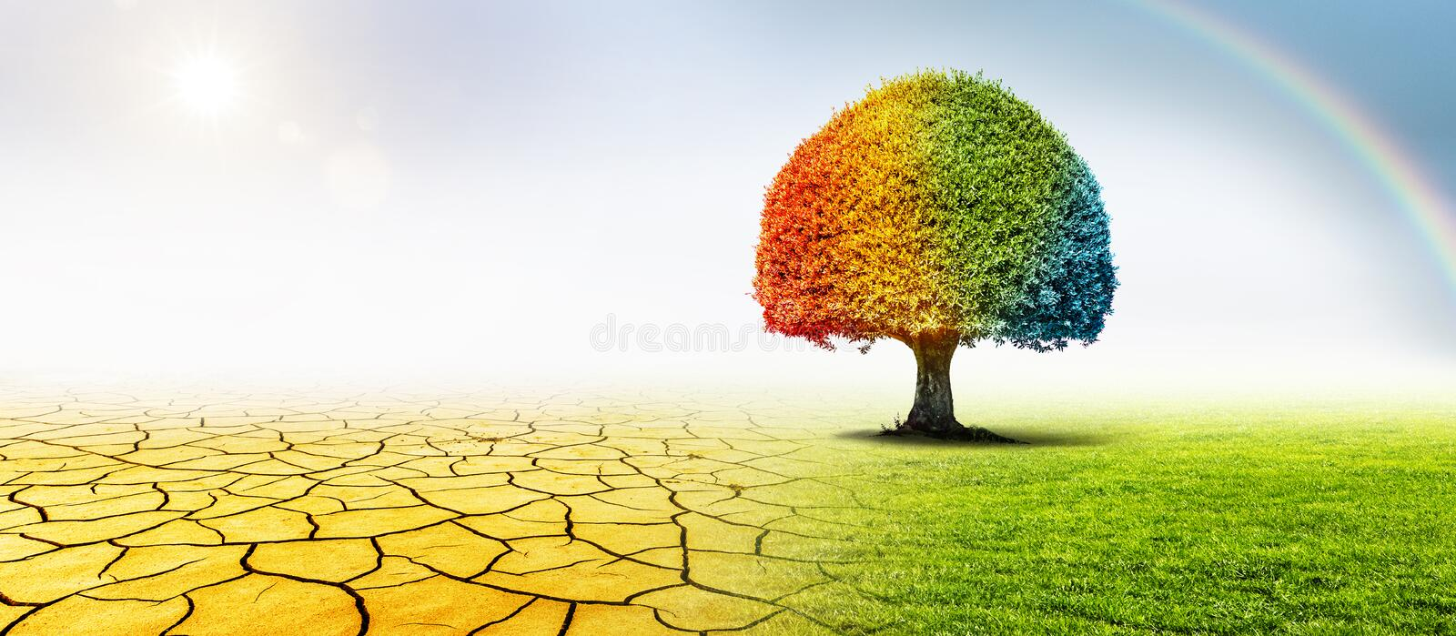Tree in a desert and a green meadow in climate change royalty free stock photography