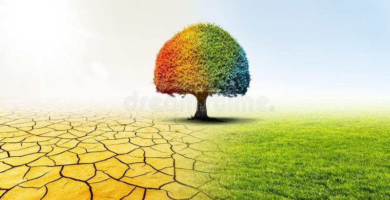 Tree in a desert and a green meadow in climate change stock images