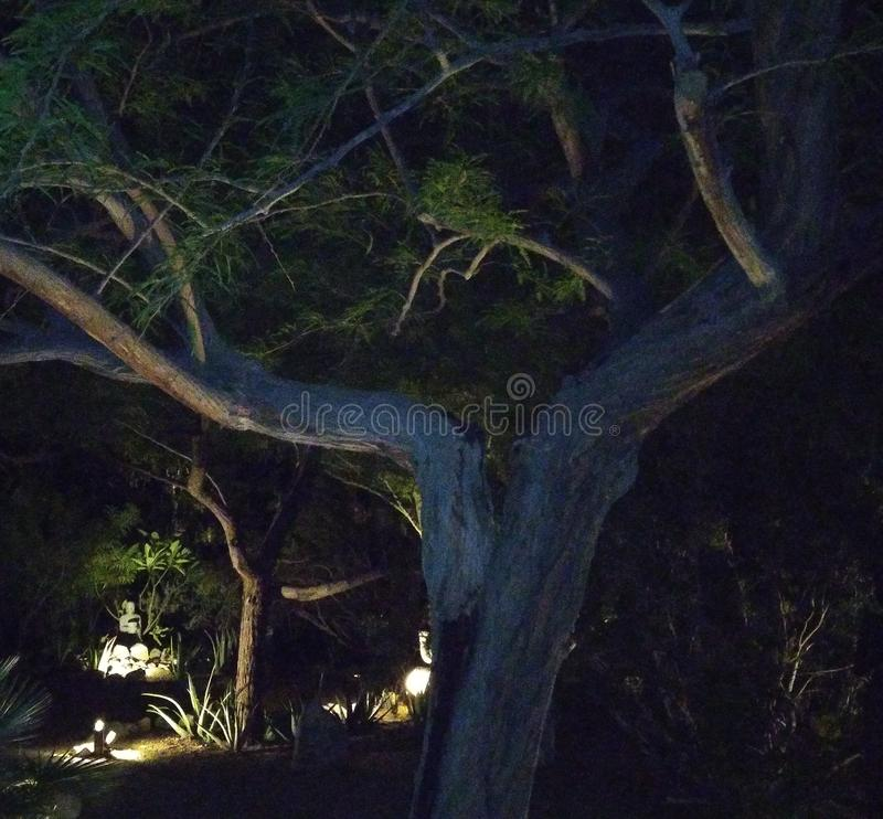 Tree desert night trail wood royalty free stock photo