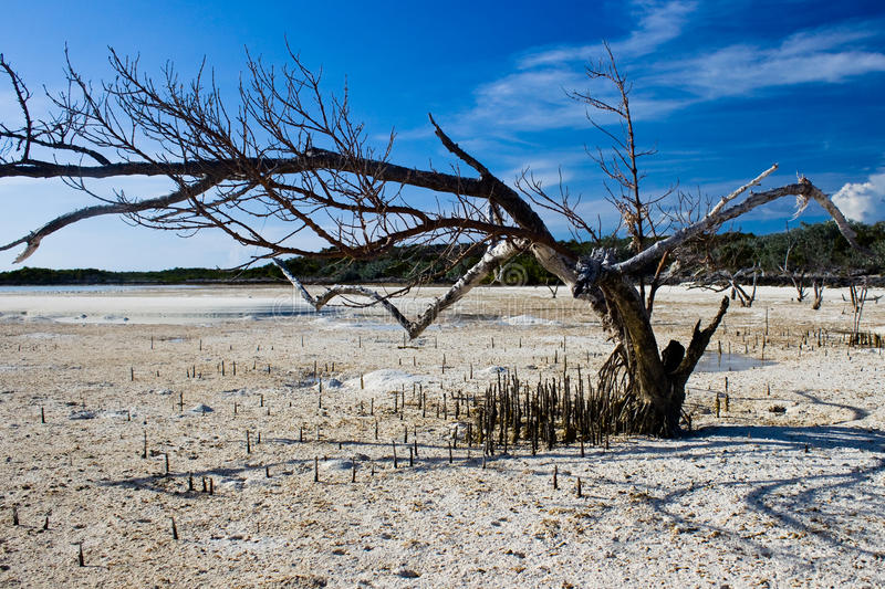 Tree on a deserted island stock photo