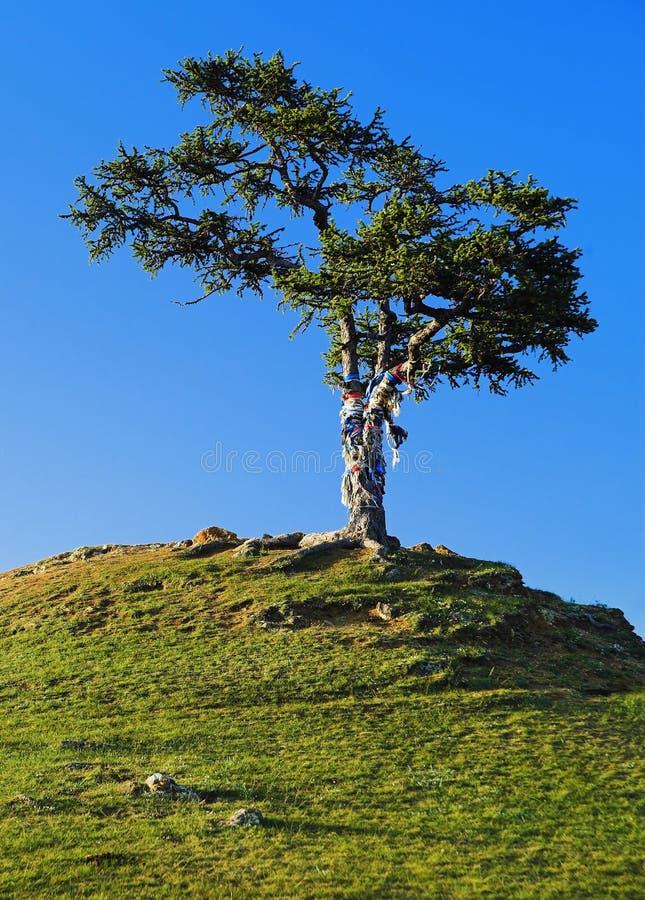 Tree of desires on Lake Baikal royalty free stock image