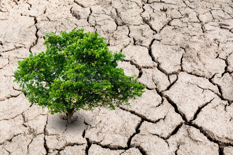A tree on desolate land. Tree on dry earth, ecology disaster royalty free stock images