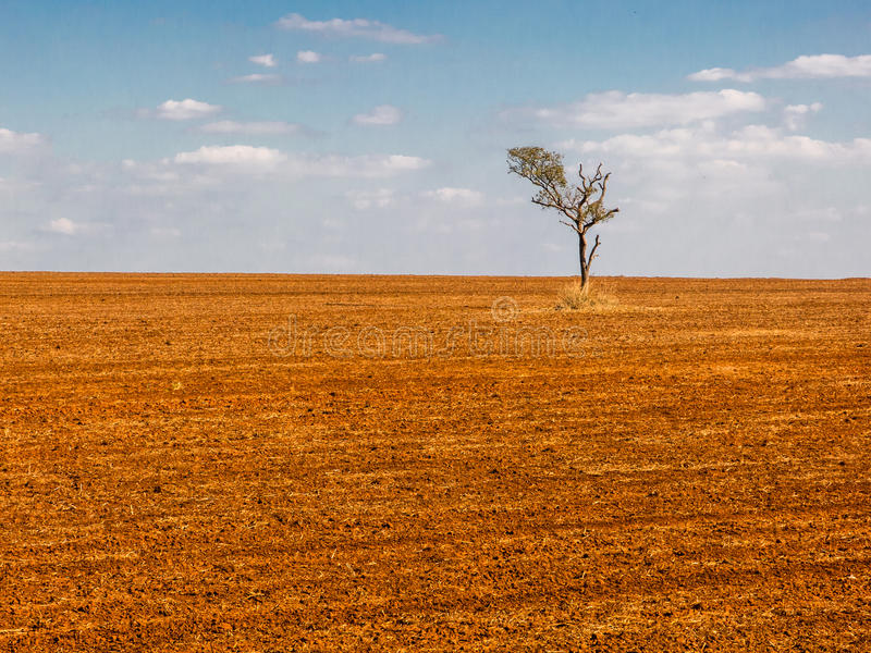 Tree in a devastated field land. Tree in a devastated land stock photography
