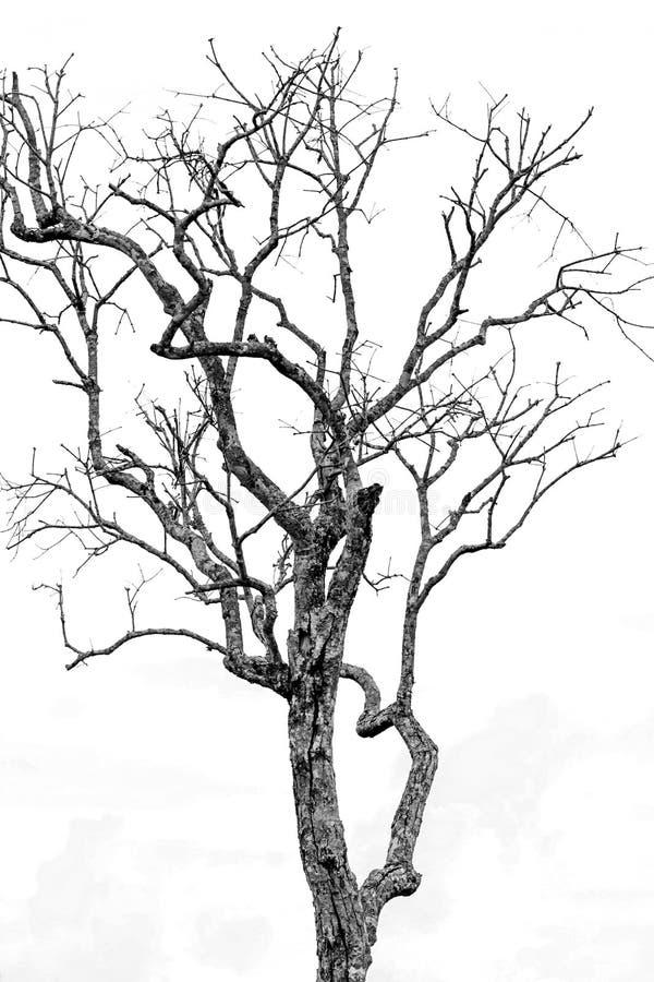 The tree died White - black