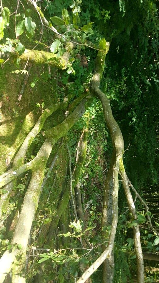 Tree down stock photography