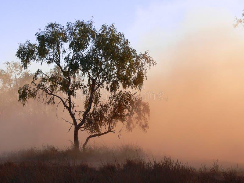 Tree in dust