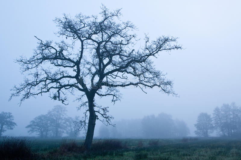 Tree In Early Morning Mist In Winter Stock Photo