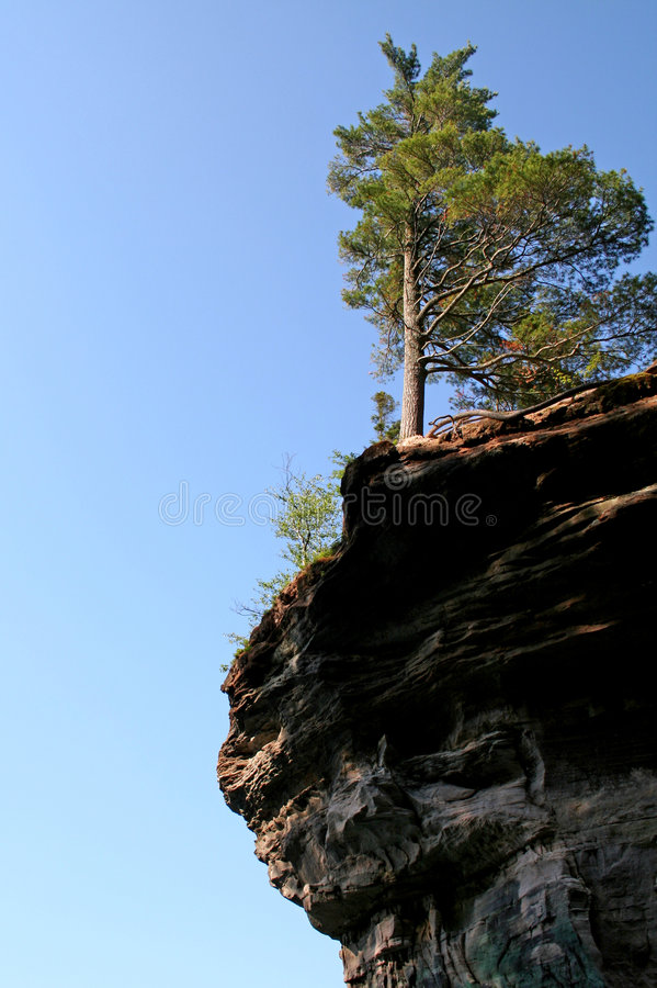 Tree on edge of cliff stock image
