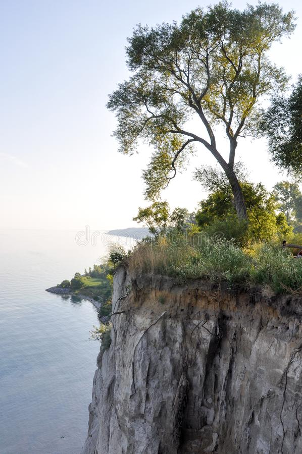 Tree on edge of cliff and Lake Ontario - Scarborough Bluffs - Toronto. Canada stock photography