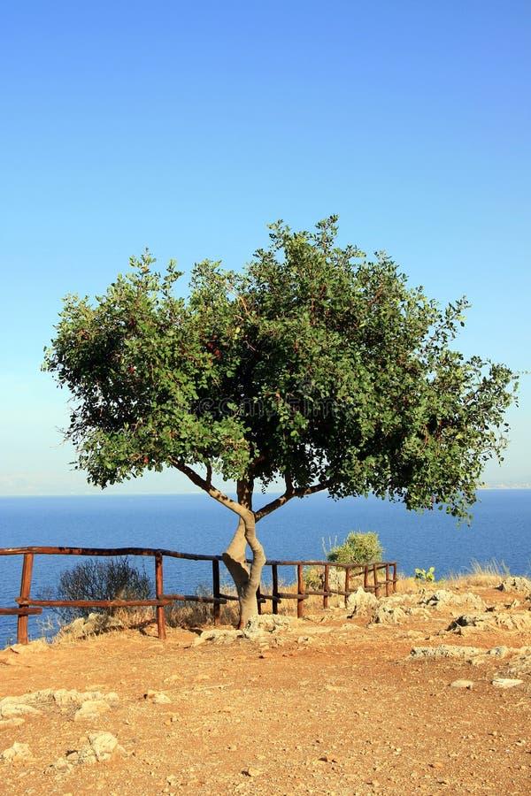 Tree on edge of Mediterranean stock photos