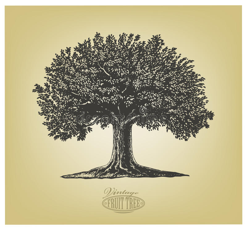 Tree in engraving style. Vector illustration of a fruit tree in vintage engraving style. Isolated, grouped, transparent background vector illustration
