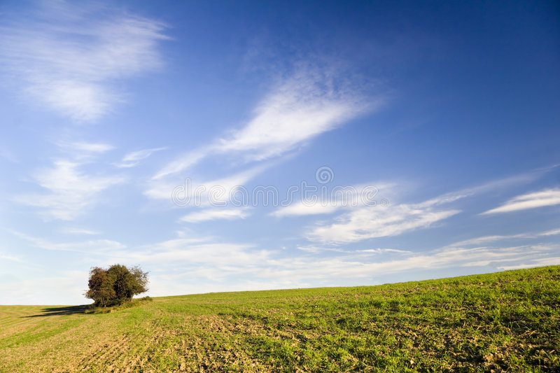 Tree on evening. In Autumn Agiculture Landscape royalty free stock photography