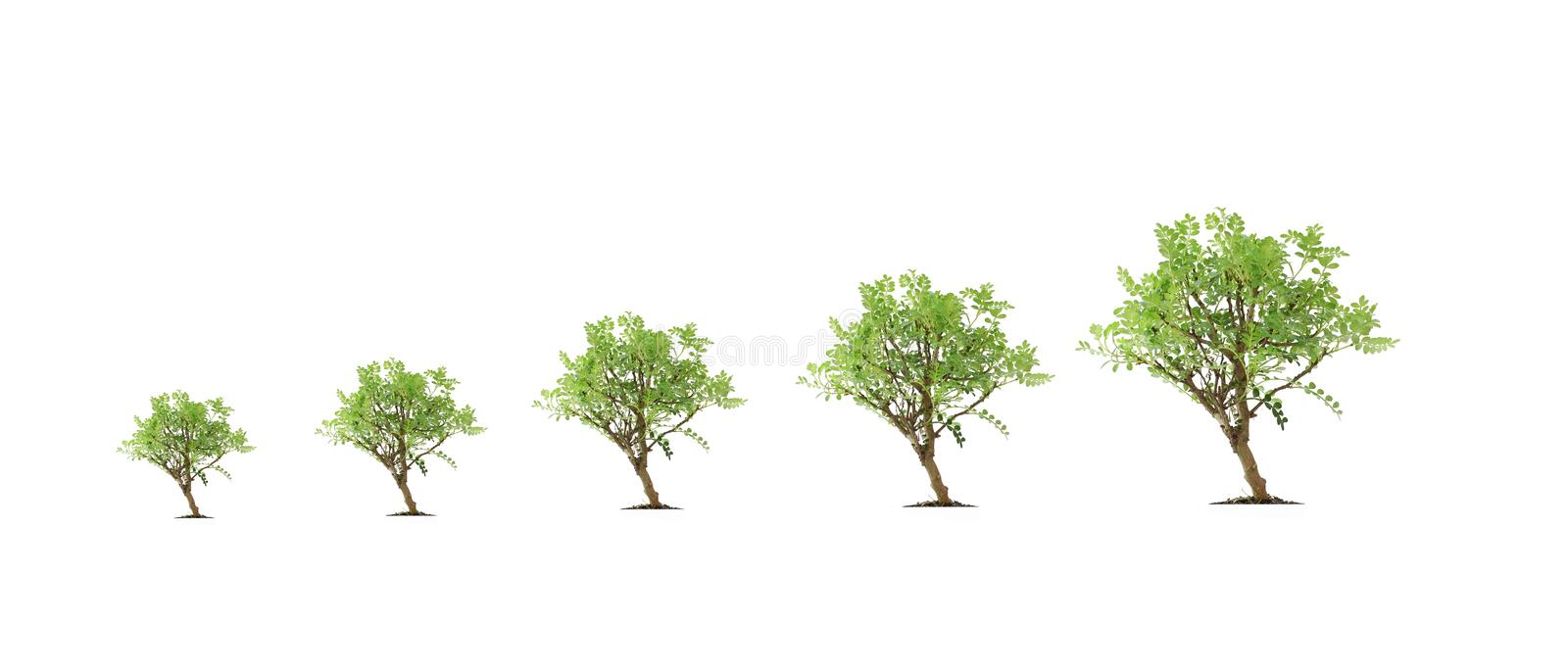 Tree Evolution Royalty Free Stock Photography