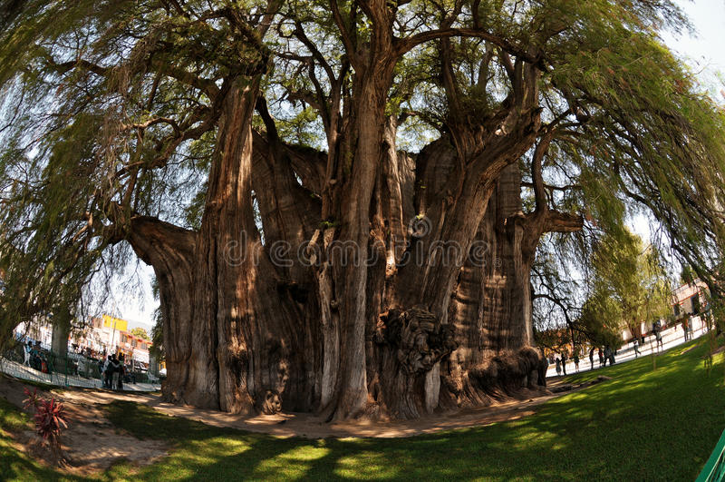 tree för ögonfisklivstid royaltyfri foto