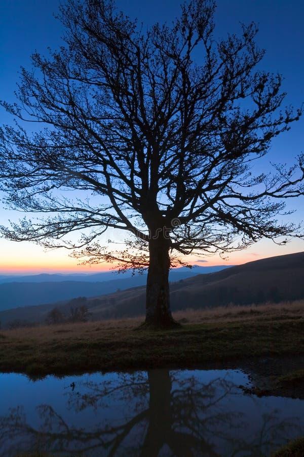 Tree för överkant för natt för berg för höstkull ensam
