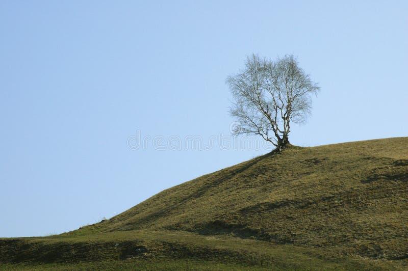 tree för 2 fjäder royaltyfri foto