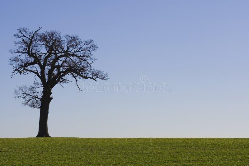 tree för 2 horisont arkivfoton