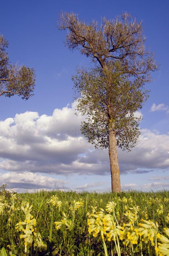 Download Tree För Bakgrundsskyfjäder Fotografering för Bildbyråer - Bild av livstid, liggande: 19775471