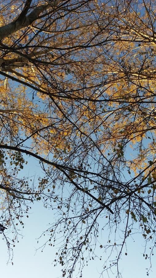 tree för blå sky royaltyfria bilder