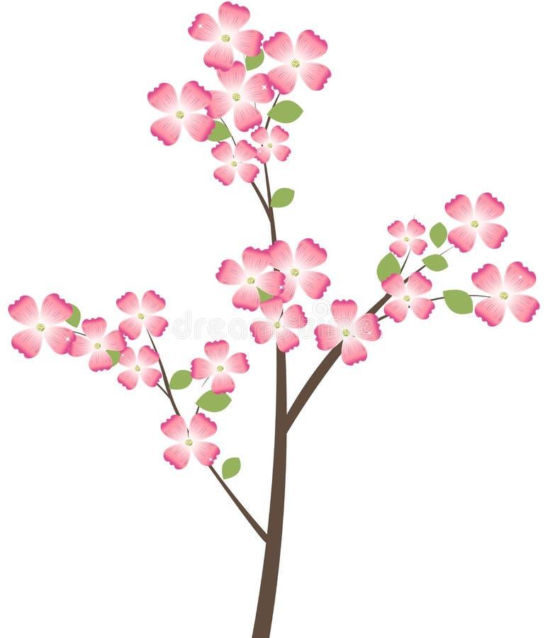 tree för filialdogwoodblomning stock illustrationer