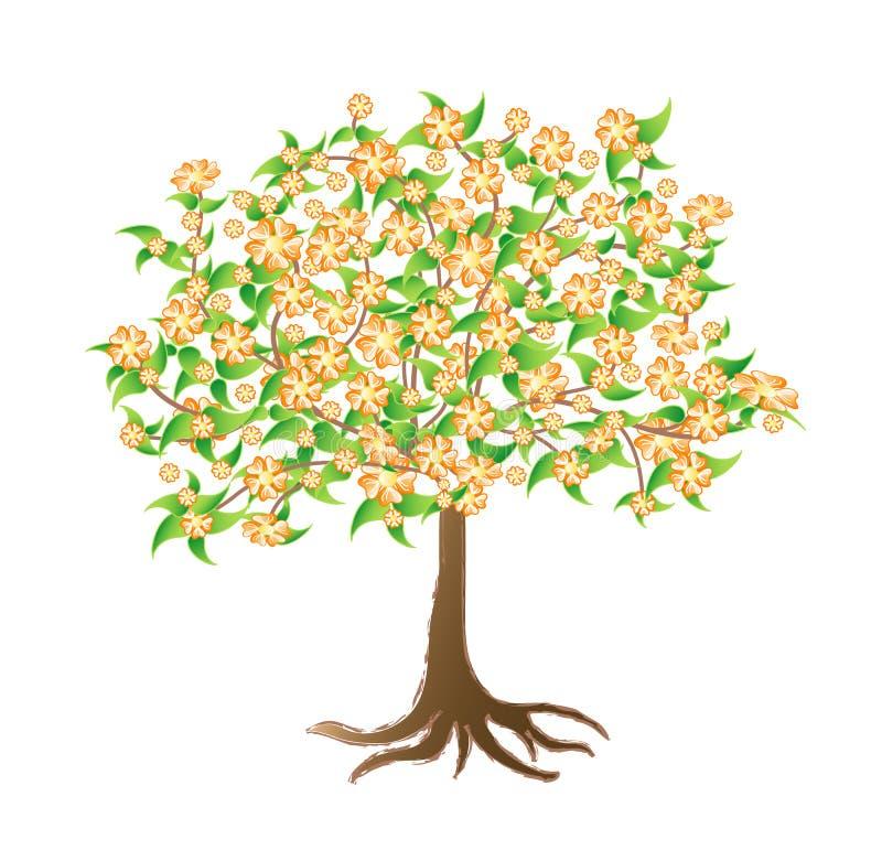 tree för fjäder för aprikosbakgrundsblomning stock illustrationer
