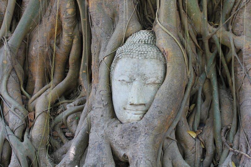 tree för huvud för ayutthayabuddha fig under royaltyfria bilder