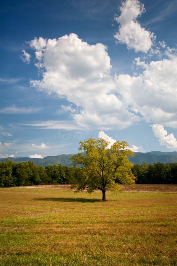 tree för oak för liggande för cadescovefält ensam fotografering för bildbyråer