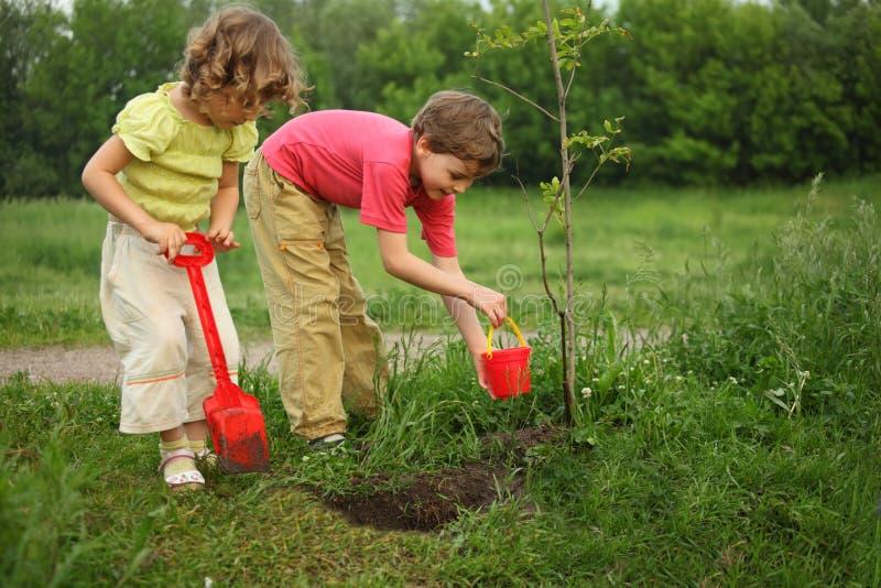 tree för pojkeflickaväxt arkivfoto