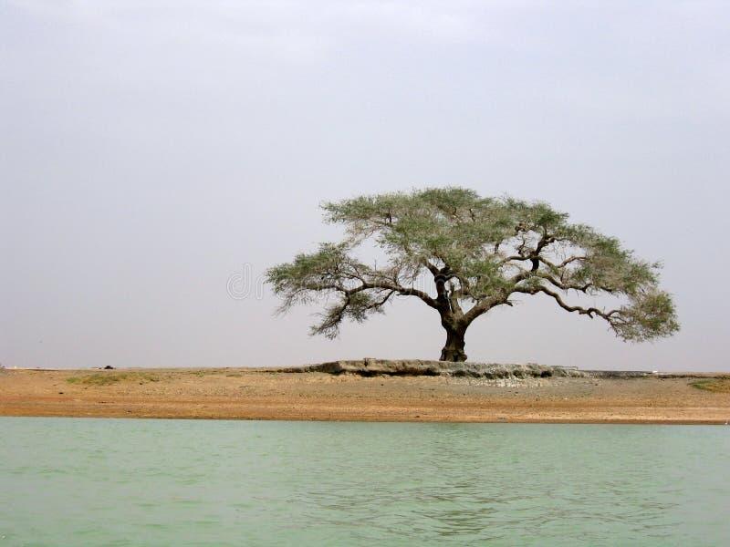 tree för randi s arkivfoto