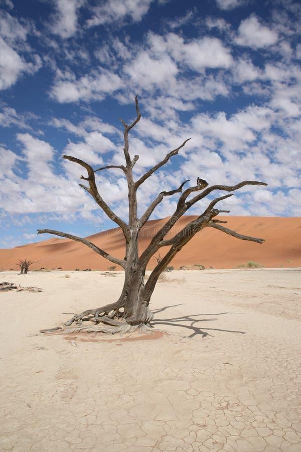 tree för rock för foto för ökenjordan petra royaltyfri bild