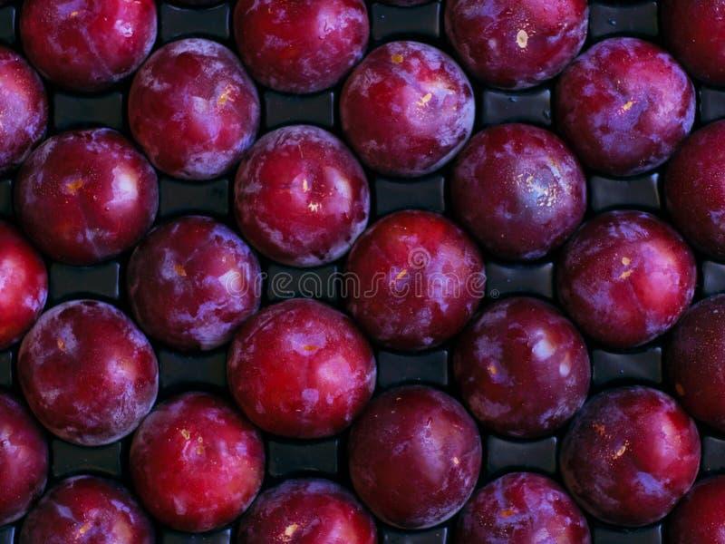 tree för sändnings för ny frukt för förbrukning klar mogen arkivbilder
