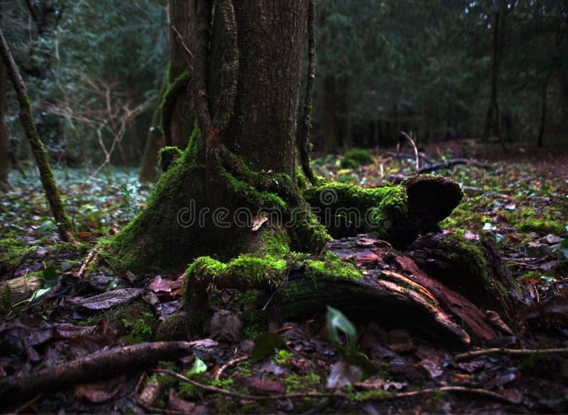 tree för stubbe för skoggrönskachampinjon royaltyfri foto