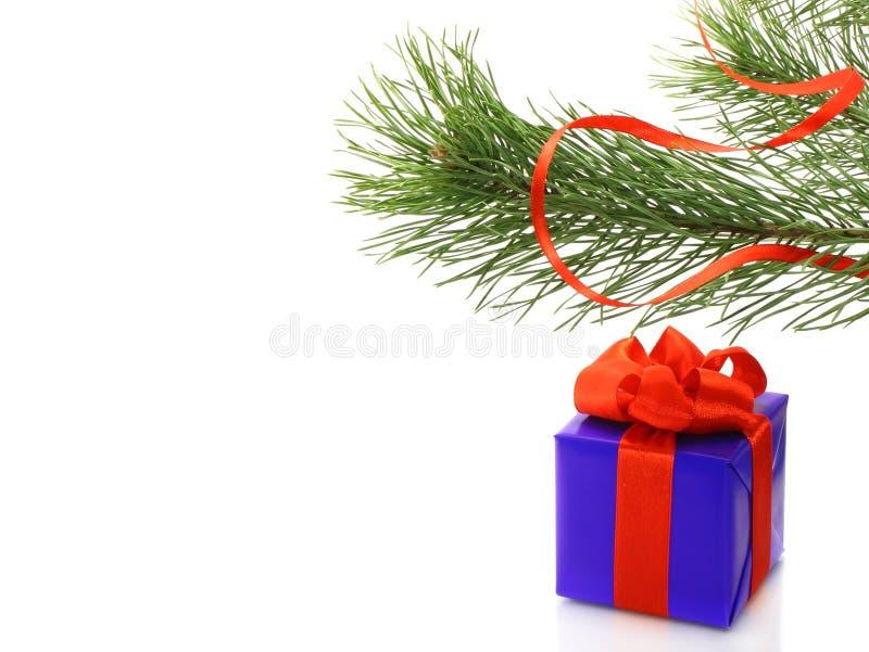 tree för present för askfilialgran royaltyfri foto