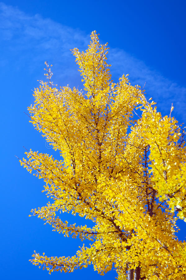 Download Tree during fall stock image. Image of leaves, sunny - 12123161