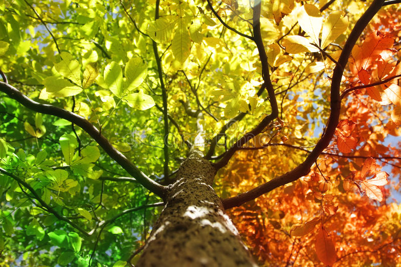 Tree in fall colors stock photo