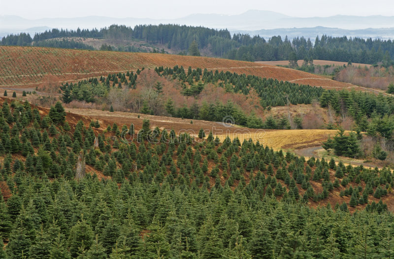 Download Tree Farm stock photo. Image of environment, path, agriculture - 4852252