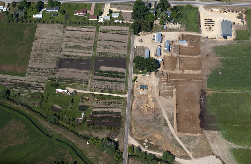 Tree farm and cattle feedlot. Aerial view of a tree farm and a cottle feedlot royalty free stock image