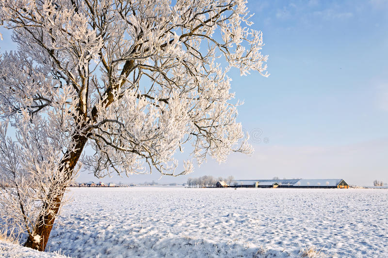 Download Tree And Farm In A White Winter Landscape Stock Image - Image: 24489281