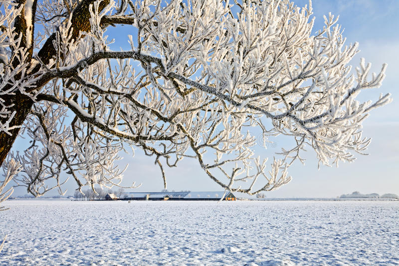 Download Tree And Farm In A White Winter Landscape Stock Photos - Image: 24489283