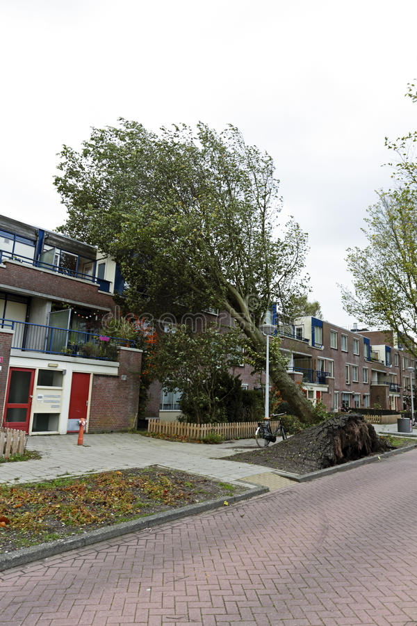 Download Tree Fell On Houses In Amsterdam The Netherlands Stock Image - Image of holland, wind: 35579653