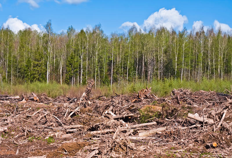 Download Tree felling stock image. Image of damage, laying, industry - 19576353