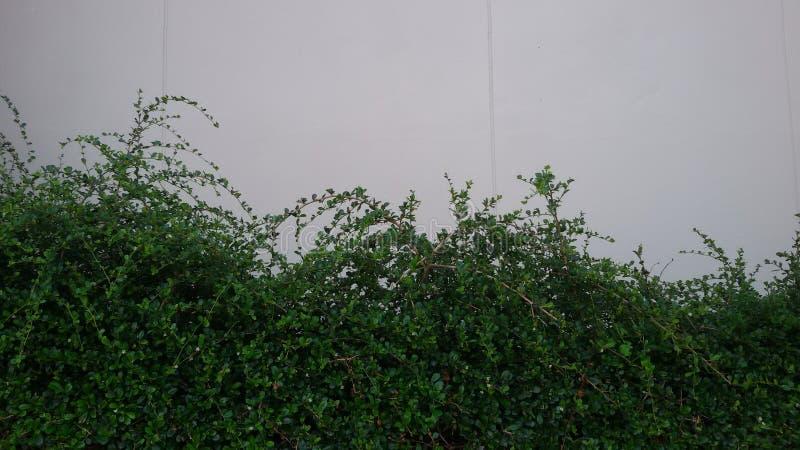 Tree Fence royalty free stock photography