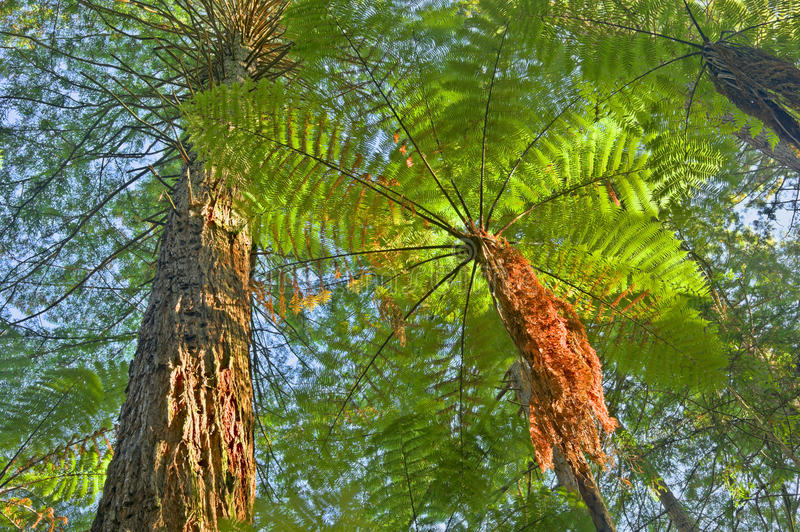 Download Tree Fern In Jungle Surroundings Stock Photo - Image: 22867620