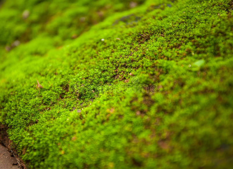 Tree ferns and moss on rocks. close up, thailand stock images