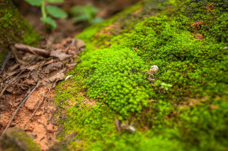 Tree ferns and moss on rocks. close up, thailand stock photo